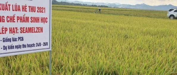 Nông dân Quảng Bình vừa thu hoạch lúa vừa chống dịch Covid19