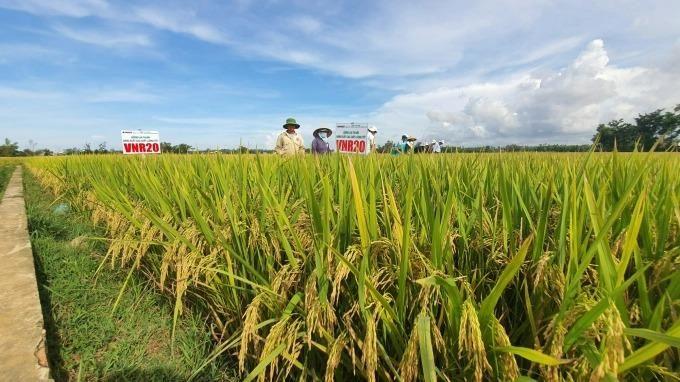 Trầm trồ bộ giống lúa của Vinaseed