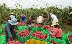 Xuất khẩu rau quả sang Trung Quốc giảm do 'nút thắt' thông quan