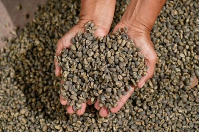 Giá cà phê hôm nay 15/9: Tiếp tục tăng nhẹ