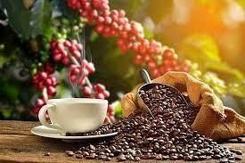 Giá cà phê hôm nay 20/9: Duy trì ở mức cao